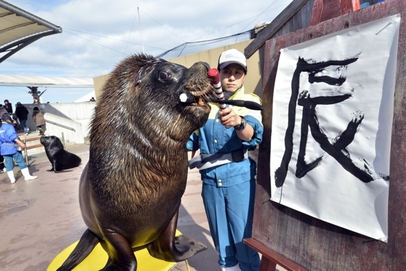 Sea lion wows tourists by writing 'dragon' for Chinese New Year