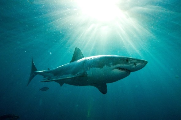 Baby great white shark 'bludgeoned to death in front of tourists'