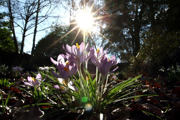 Forecasters predict balmy March for UK
