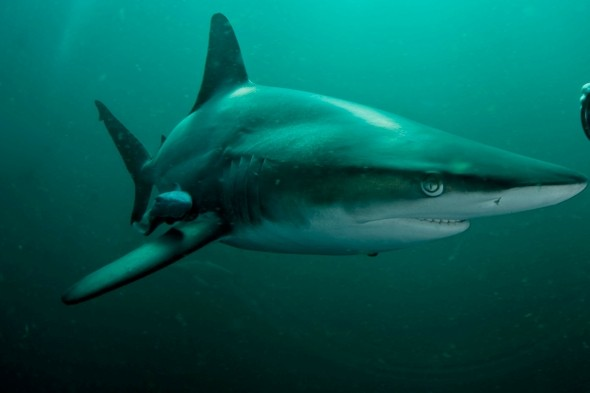 New Smyrna Beach in Florida sees TWO shark attacks  'within minutes' of each other