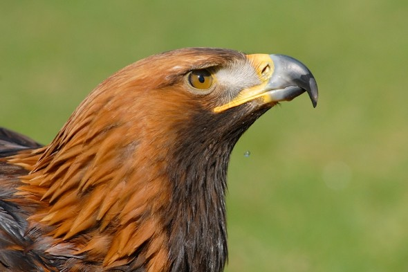British woman fights off eagle who tried to steal dog in Spain