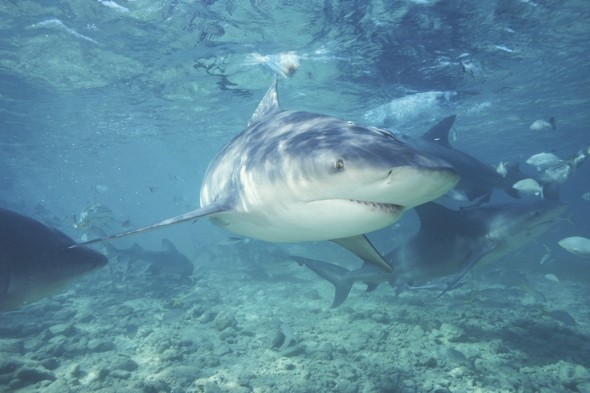 Tourist speaks out about near-death shark attack in Florida