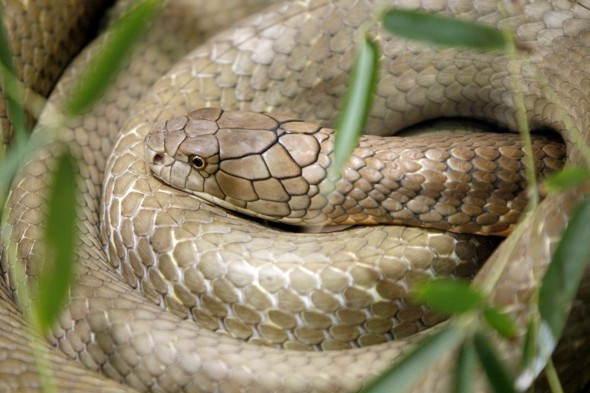 Keeper at UK zoo airlifted to hospital after venomous snake bite