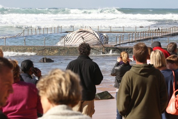 Sad scene as humpback whale washes up in Sydney