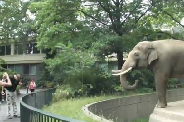Video: Unsuspecting visitor sprayed with mud by elephant at Berlin Zoo