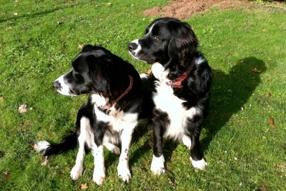 Farmer Shoots Dogs Dead After Escaping Kennels While