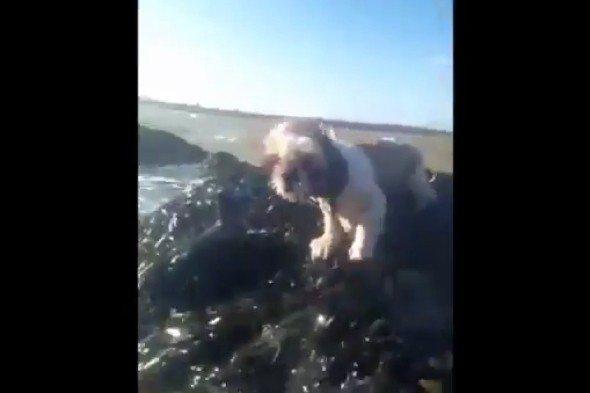 Video: Adventurer halts 600-mile challenge to save 'drowning' dog stranded on rocks