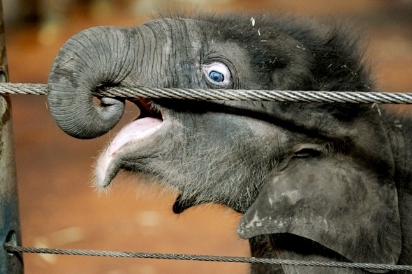Elephant crushes keeper in Taronga Zoo attack