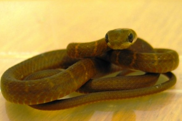 Snake on a plane! Reptile found under passenger seats on flight at Glasgow Airport