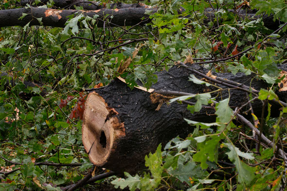 Woman killed by falling tree amid severe storms