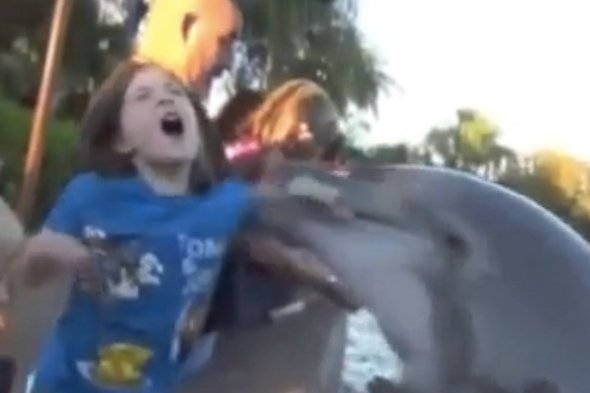 Dolphin bites girl at Sea World Orlando