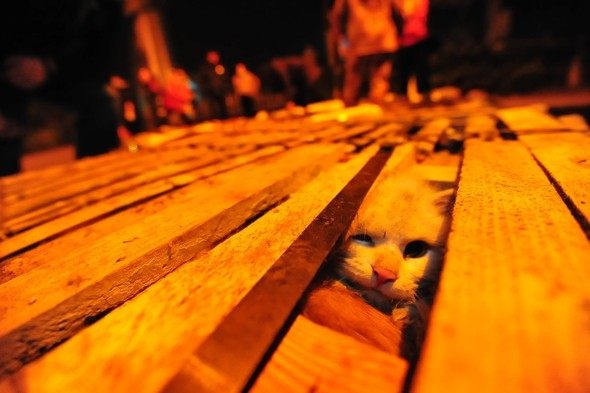 1,000 cats saved from Chinese restaurant fate after lorry crash