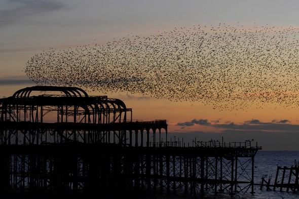Starlings in the sky tell us a thing or two