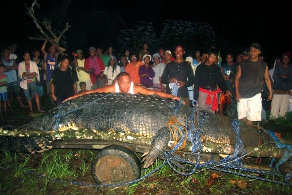 World's largest crocodile in captivity Lolong dies in Philippines