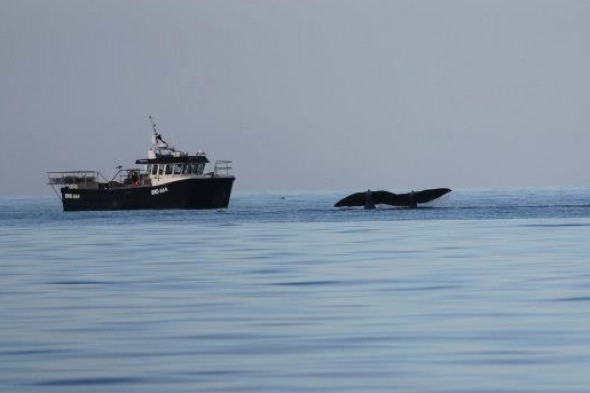 'Extraordinary' sighting of sperm whales in Scotland