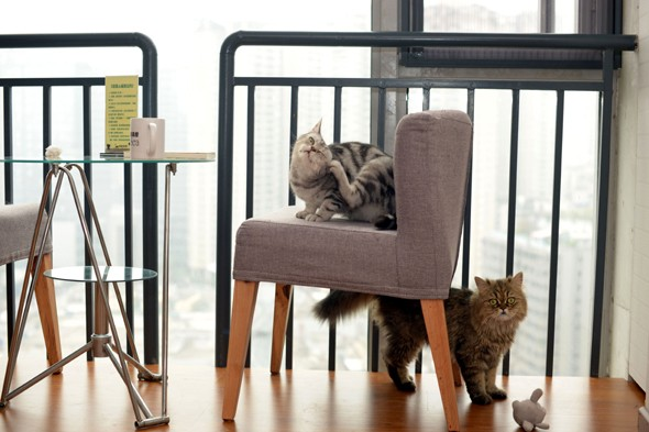 Love cats and coffee? New London cafe will let you pay by the hour to pet cats