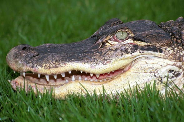 Police hunt crocodile on the loose in Spanish tourist resort