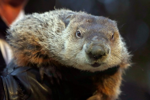 US prosecutor seeks death penalty for famous weather-forecasting groundhog