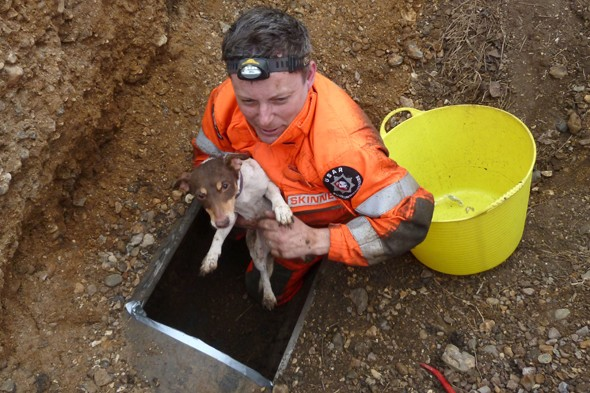 Woman hires digger to rescue Jack Russel trapped in pipe for five days