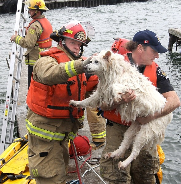 Blind dog rescued by firefighters after falling off ferry dock into freezing sea