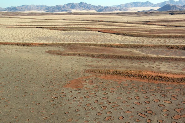 Has the secret of Namibia's 'fairy circles' finally been revealed?