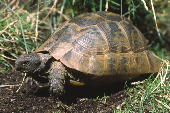 Tortoise found alive after being buried under pile of rubble for 10 months
