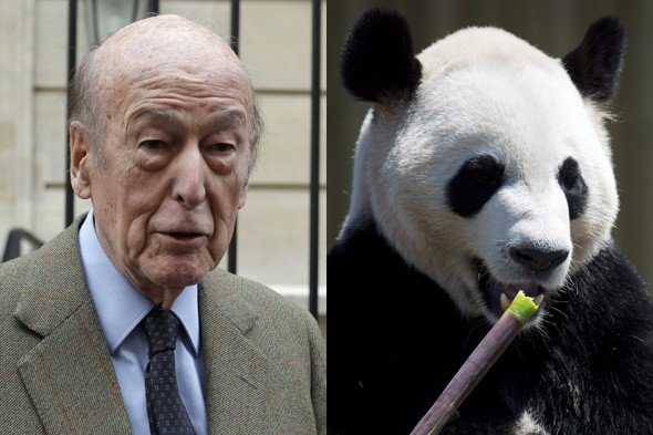 Former French president claims he was attacked by panda at zoo