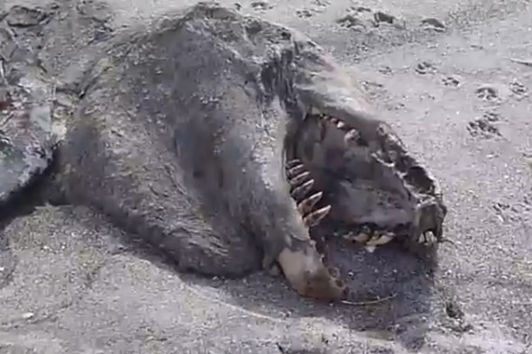 Sea monster washes up on beach in New Zealand