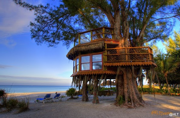 Couple launch online petition to save their Florida treehouse