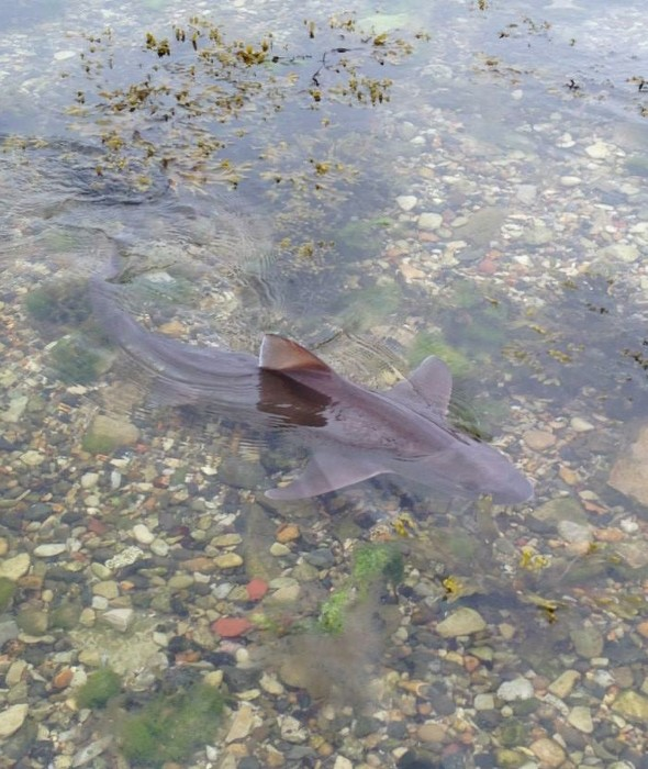 Chinese men caught trying to catch stranded shark in Dorset to turn into soup