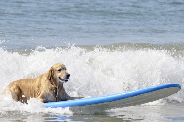 The Paw Seasons: World's most expensive dog holiday launches at £47,000