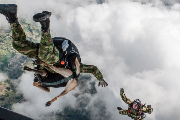 Crime-fighting canine parachutes from plane at 1,000ft