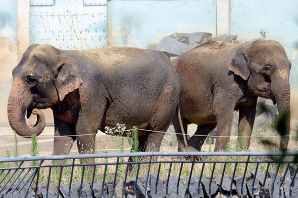 Zoo elephants saved from death by royalty in France