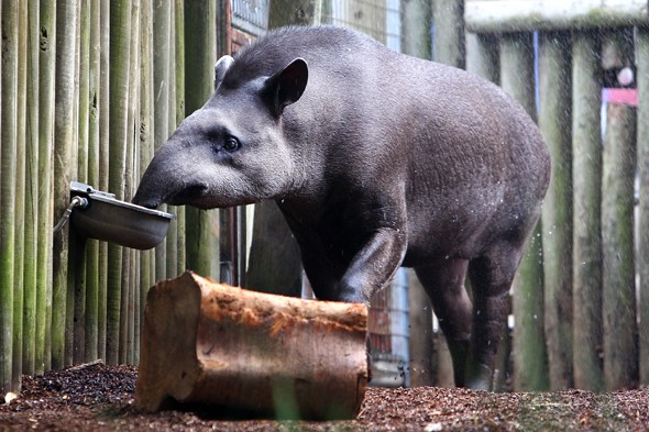 Two-year-old girl savaged in horror attack by tapir at Dublin Zoo