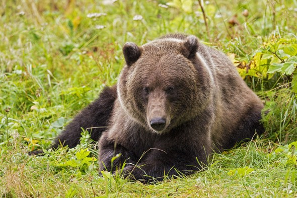Hunter mauled by bear in Alaska rescued after 36 hours in wilderness