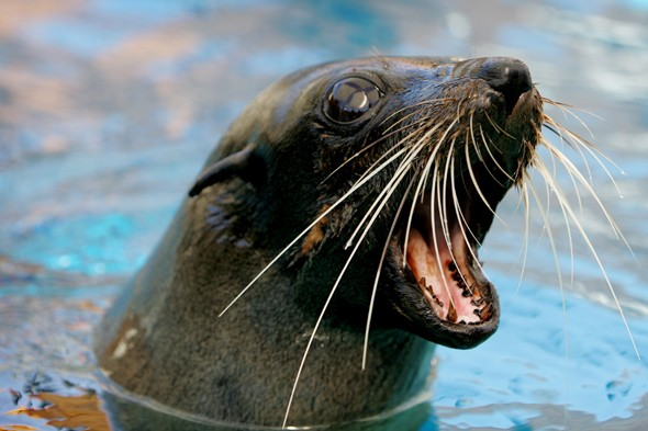 Keeper who punched seal at Bristol Zoo returns to work