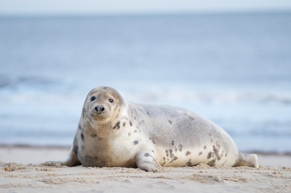 First ever count reveals over 700 seals in Thames Estuary