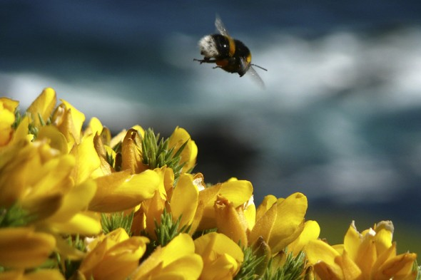 Farmers to set up 3,000-mile 'bee motorways' around Britain?