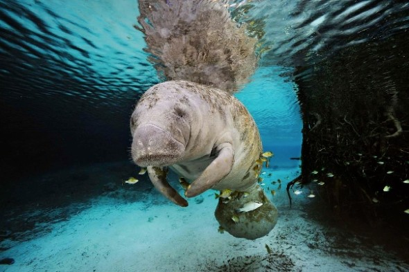 Photographer captures amazing images of endangered underwater animals