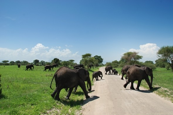 University dean 'trampled to death by elephant' on safari holiday in Tanzania