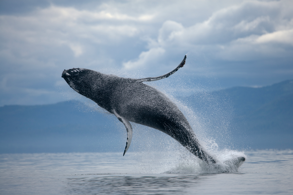 Best things to see from a cruise ship holiday: whales, sunsets, celebrities, northern lights