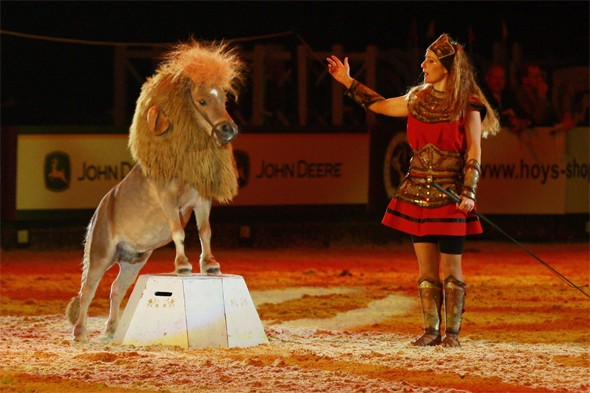Identity crisis? The pony that performs as a lion
