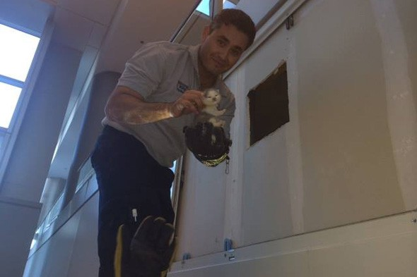 Three tiny kittens rescued from airport ceiling