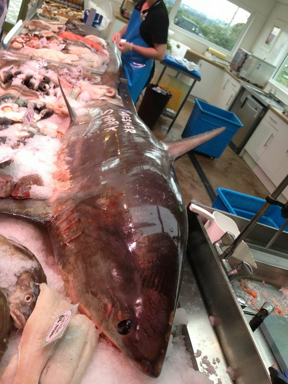 Outrage as fishmonger sells endangered shark as catch of the day