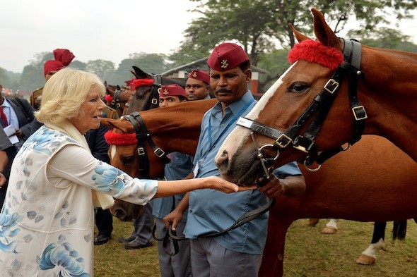 Camilla parker Bowles Duchess of Cornwall feeds a horse in India