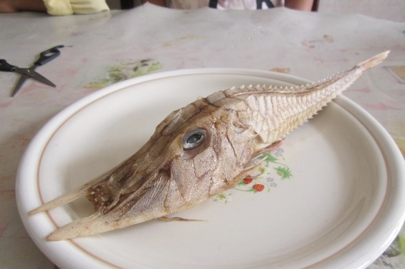 What is it? Terrifying mystery sea creature found in Borneo