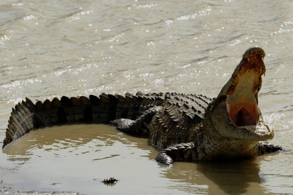 Tourists warned as huge crocodile spotted at Phuket beach