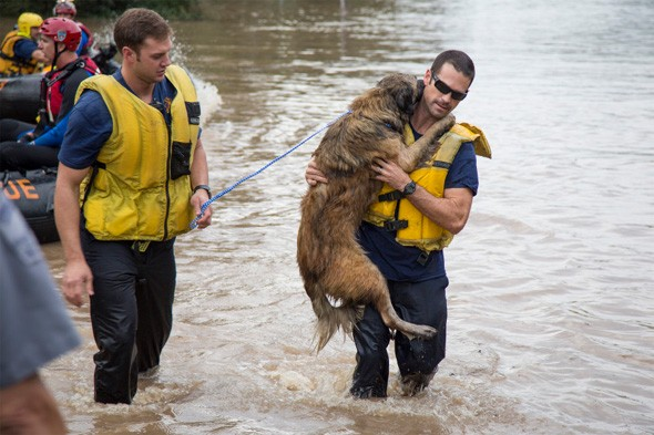 Heartwarming photo: Firefighters rescue dog from flood waters