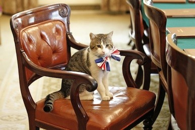 Downing Street Cat picture