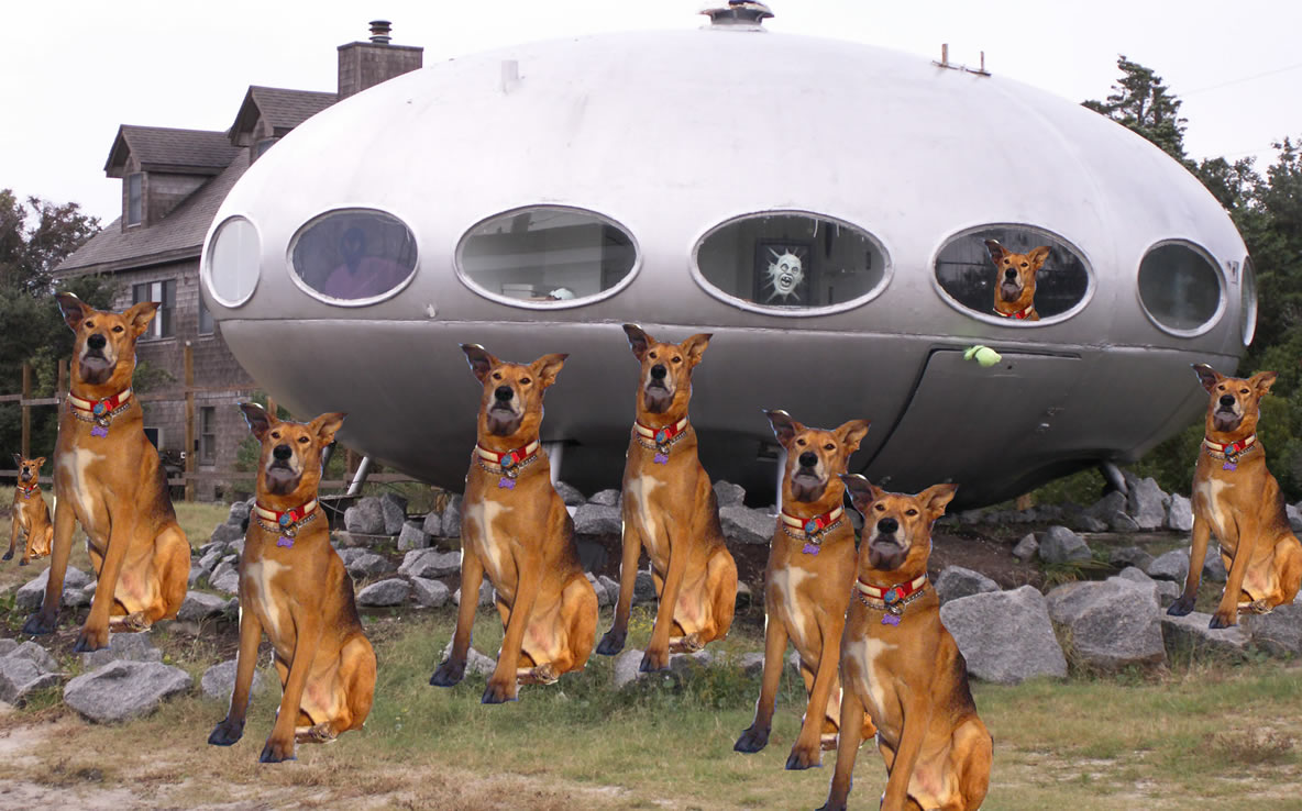 Dog Clones invade plantet earth